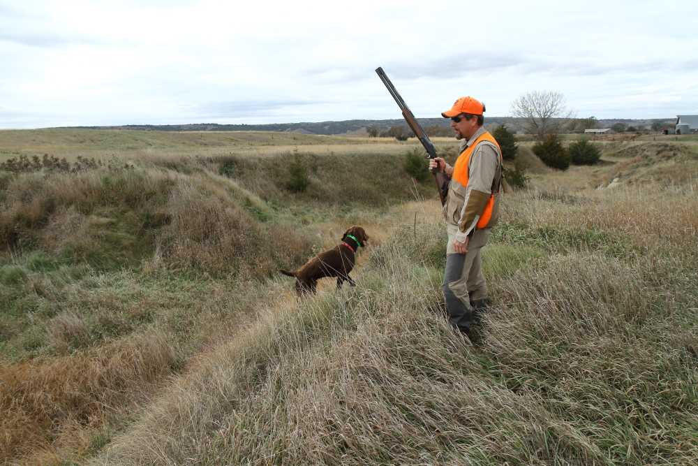Importance of Pheasant Hunting Dogs for an Amazing Hunting Experience